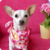 Adopt A Pet :: Cindy - Irvine, CA