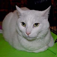 Adopt A Pet :: Scooter - Overland Park, KS