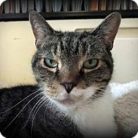 Adopt A Pet :: Sammy - Saranac Lake, NY