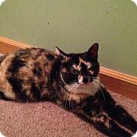 Adopt A Pet :: Ariel - East Hanover, NJ