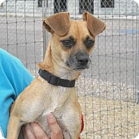 Adopt A Pet :: Tiny - Wickenburg, AZ