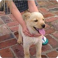 Adopt A Pet :: Buddy - courtesy post - Glastonbury, CT