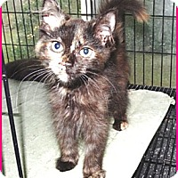 Adopt A Pet :: Betsy - Galloway, NJ