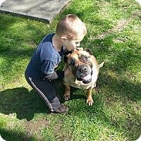 Adopt A Pet :: Annie - Roy, WA