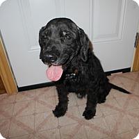 Adopt A Pet :: Bruce  -Adopted! - Kannapolis, NC