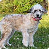 Adopt A Pet :: Kelby - Starkville, MS