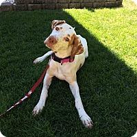 Adopt A Pet :: Leia - Meridian, ID