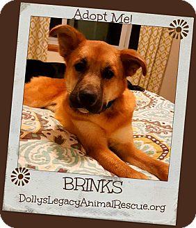Shepherd (Unknown Type) Mix Dog for adoption in Lincoln, Nebraska - BRINKS