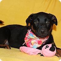 Adopt A Pet :: Greta (has been adopted) - Trenton, NJ