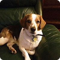 Adopt A Pet :: Charlie - Blackstock, ON