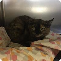 Adopt A Pet :: Ms. Jackson - Lunenburg, MA