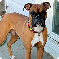 Adopt A Pet :: CHOPPER - Boise, ID