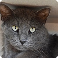 Adopt A Pet :: Ben - Des Moines, IA