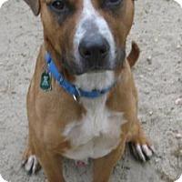 Adopt A Pet :: Jack - Voorhees, NJ
