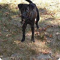 Adopt A Pet :: Garrison - Lewisville, IN