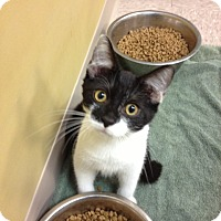 Adopt A Pet :: Dice - Byron Center, MI