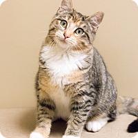 Adopt A Pet :: Doona - Chicago, IL