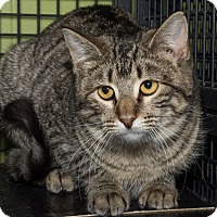 Adopt A Pet :: Adele - St. Louis, MO