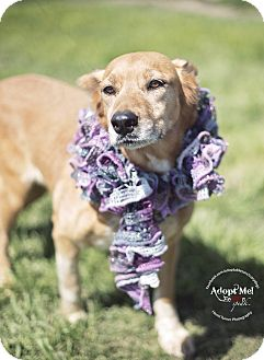 Cattle Dog/Setter (Unknown Type) Mix Dog for adoption in Iola, Texas - Flame