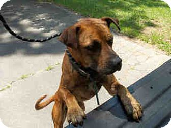Catahoula Leopard Dog Mix Dog for adoption in Newnan City, Georgia - Henry