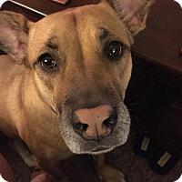 Adopt A Pet :: Isabella - tucson, AZ