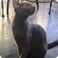 Adopt A Pet :: Big Foot (special needs) - Houston, TX