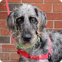 Adopt A Pet :: Norwood - Harrison, NY