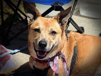 Cattle Dog Mix Dog for adoption in Alpharetta, Georgia - Triscuit