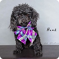 Adopt A Pet :: Hank - Houston, TX