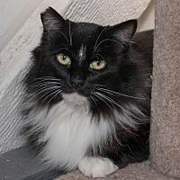Adopt A Pet :: Kayla (& Zack) [CP] - Oakland, CA