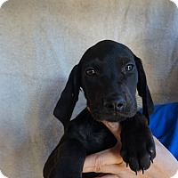 Adopt A Pet :: Fonzo - Oviedo, FL
