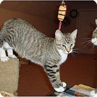 Adopt A Pet :: Peanut - Westfield, MA
