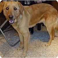 Adopt A Pet :: Amber - Toronto/Etobicoke/GTA, ON