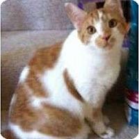 Adopt A Pet :: Cameron - Reston, VA