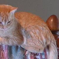 Adopt A Pet :: Juice - Eldora, IA