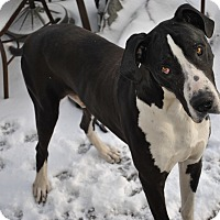 Adopt A Pet :: Toby - Springfield, IL