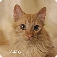 Adopt A Pet :: Sonny - Foothill Ranch, CA