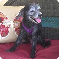 Adopt A Pet :: INKIE - Melbourne, FL