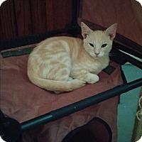Adopt A Pet :: Pumpkin - San Ramon, CA