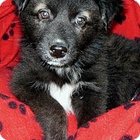 Adopt A Pet :: Hildy - Normandy, TN