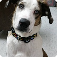 Adopt A Pet :: Oakley - West Hartford, CT