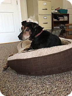 Doberman Pinscher Mix Dog for adoption in Youngsville, North Carolina - Trooper ~Sponsored~