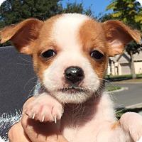 Adopt A Pet :: Carrie#5F - Orlando, FL