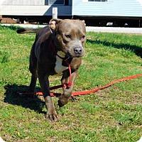 Adopt A Pet :: Eden-011302k - Tupelo, MS