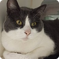 Adopt A Pet :: Dorianna 6604 - Joplin, MO
