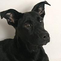 Adopt A Pet :: Allie - Redding, CA
