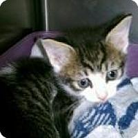 Adopt A Pet :: U009 - Rocky Mount, NC