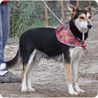 Adopt A Pet :: Madeline-URGENT-NEED FOSTER - Seattle, WA