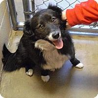 Adopt A Pet :: Lucy - Wickenburg, AZ