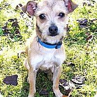 Adopt A Pet :: Suzie Q - Mocksville, NC